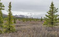 Alaska,Interior - Denali National Park 01.JPG