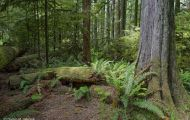 British Columbia, Vancouver Island - McMillan Provincial Park 01.JPG