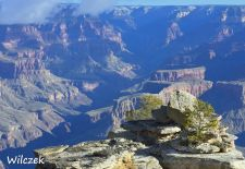 Grand Canyon - Mutiger Strauch mit Canyon-Panorama am Mather Point.JPG