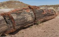 Arizona, Northcentral-Eastern - Petrified Forest National Park 06.JPG