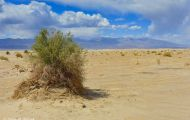 Kaliofornien, Desert - Death Valley National Park 01.JPG