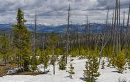Wyoming, Northwest - Yellowstone National Park Dunraven Pass 01.JPG