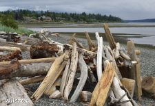 Vancouver Island - Campbell River, Tyee Point.JPG