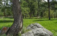 Wyoming, Northeast - Devils Tower National Monument 04.JPG
