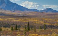 Alaska,Interior - Denali National Park 09.JPG