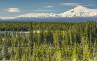 Alaska,Interior - Tok Cutoff Highway 03.JPG