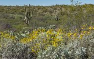 Arizona, Northcentral-Eastern - Tucson  Saguaro Nationall Park, Rincon Mountain District 02.JPG