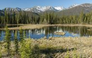 Alaska,Interior - Tok Cutoff Highway 02.JPG