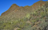 Arizona, Southeast - Tucson   Gates Pass Road 02.JPG