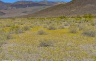 Kaliofornien, Desert - Death Valley National Park 02.JPG