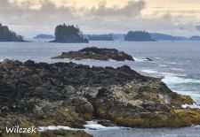 Vancouver Island - Ucluelet, Wild Pacific Trail.JPG