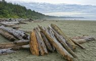 British Columbia, Vancouver Island - Pacific Rim National Park & Preserve  Long Beach 01.JPG