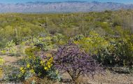 Arizona, Northcentral-Eastern - Tucson  Saguaro National Park, Rincon Mountain District 01.JPG