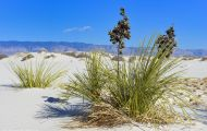 New Mexico, Southeast - White Sands National Monument 02.JPG