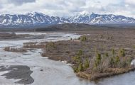 Alaska,Interior - Denali National Park 02.JPG