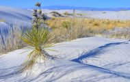 New Mexico, Southeast - White Sands National Monument 04.JPG